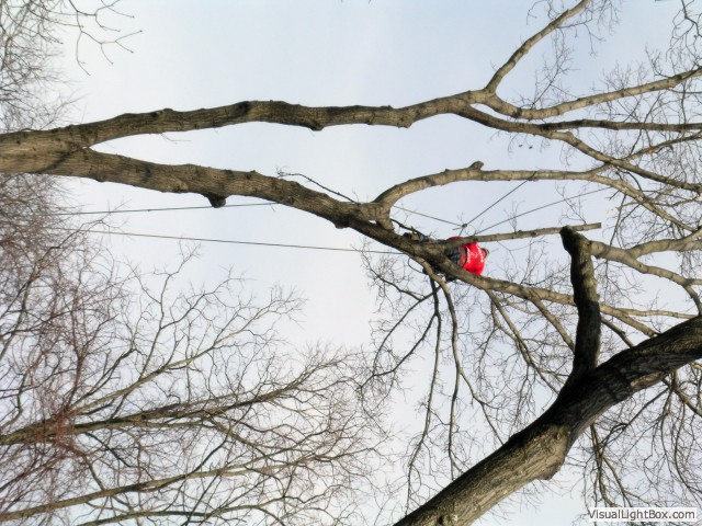 Tree Care Expert in Oyster Bay, NY