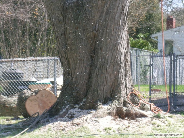 Tree Care Services in Dix Hills, NY