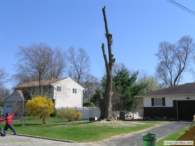 Tree Care in Huntington, NY